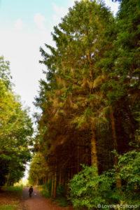 excursiones de otoño Kinneil Boness