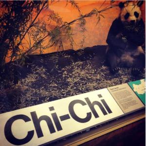 chi chi panda - que faire à Londres - Que visiterà Londres
